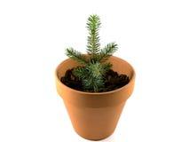 Pot en céramique avec l'élevage impeccable d'arbre D'isolement sur le blanc Photos stock