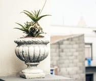 Pot en pierre d?coratif pour des usines sur la terrasse d'un b?timent historique ? Catane, Sicile, Italie photographie stock