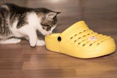 Pot en schoen stock afbeelding