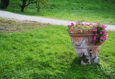 Pot in the field, flowers and petals, natural background, garden beauty Royalty Free Stock Image