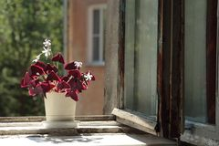 A pot with a flower on the window Royalty Free Stock Images
