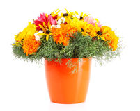 Pot with  flowers Royalty Free Stock Photos