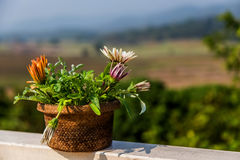 A pot of flowers on the balcony. Balustrade with a beautiful view of the mountain on a sunny day Royalty Free Stock Photo