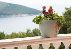 A pot of flowers on the balcony balustrade with a beautiful view Stock Photography