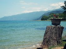 Pot of flowers on the coast of Lake Ohrid Stock Images