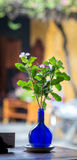 A pot of flowers at coffee shop in Hoi An, Vietnam Royalty Free Stock Photo