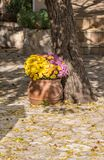 Pot with flowers at a courtyard on a sunny day. Royalty Free Stock Photography