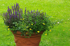 Pot with flowers in a garden Royalty Free Stock Photo