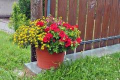 Pot with flowers - Geranium, Sanvitalia and Fuchsia Stock Images