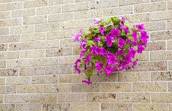 Pot with flowers hanging on a brick wall Stock Photography