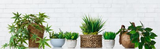 Pot flowers hobby concept. Different house plants in pots on white table at white brick wall background. Pot flowers hobby concept, panorama royalty free stock photography