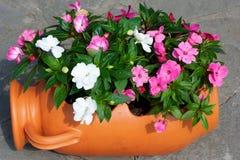 Pot of flowers. Horisontal shoot stock photos