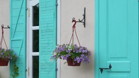 Pot with flowers on the house wall stock video