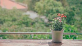 Pot of Flowers Near Balcony royalty free stock photo