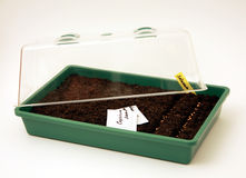Free Pot For Seeds Sowing Royalty Free Stock Photography - 17938137