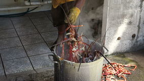A pot full of lobsters on bequia. Caribbean langouste being pulled from a pot of rapidly boiling saltwater at an outdoor kitchen in the windward islands stock video
