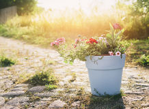 Pot with garden flowers on summer or autumn nature background Stock Photo