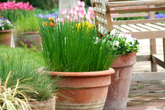 Pot gardening on the terrace - herb and flower Stock Images