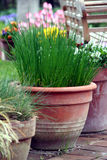 Pot gardening on the terrace - herb and flower stock photography