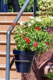 Pot geranium flowers on a railing stairs. Home decoration with hanging pot geranium flowers in Italy stock images