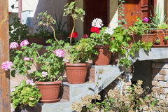 Pot geranium flowers on a stairs in front of the house. Home decoration with pot geranium flowers royalty free stock photography