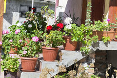 Pot geranium  flowers on a stairs in front of the house Royalty Free Stock Image