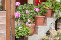 Pot geranium  flowers on a stairs in front of the house Royalty Free Stock Photography