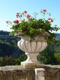 Pot of geraniums Royalty Free Stock Image
