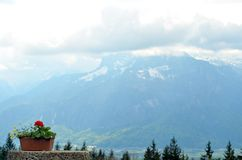 A pot of geraniums seen against the backdrop of a snow covered mountain. A pot of geraniums rests on a stone ledge. The tops of some pine trees are visible Stock Photography