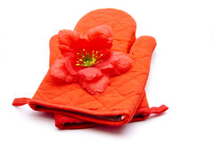 Pot glove hibiscus blossom. On white background Stock Photography
