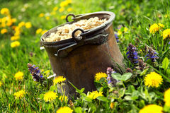 Pot of gold on a meadow Royalty Free Stock Photos