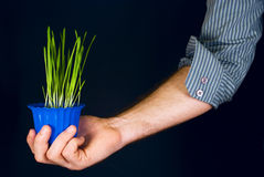 pot of grass in the hand Stock Photography