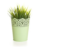 Pot with grass on a white background Royalty Free Stock Photo