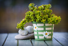 Pot with green plant.GN. Pot with a green plant standing on a wooden table royalty free stock image