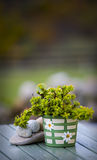 Pot with green plant.GN. Pot with a green plant standing on a wooden table royalty free stock photography