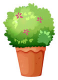 A pot with a green plant. Illustration of a pot with a green plant on a white background royalty free illustration