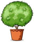 Pot with a green plant Stock Photos