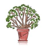 Pot with green tree, sketch for your design Royalty Free Stock Photo