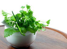 Pot with herbs. A pot with herbs on brown board stock photos