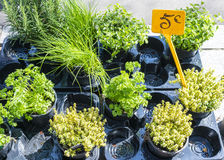 Pot of herbs in French market with 5 euro sign stock photos