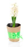 Pot with hyacinth Royalty Free Stock Images