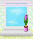 Pot of hyacinth stands on the windowsill. Spring time Stock Image