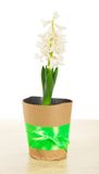 Pot with hyacinth on table Stock Image