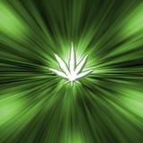 Pot leaf. Green pot Leaf Starburst - Marijuana stock images