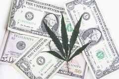 Pot leaf with cash. Close up of a pot leaf sitting on American dollars on white stock photo