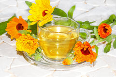 Pot marigold or Calendula officinalus Stock Image