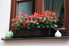 Pot met begoniabloemen Royalty-vrije Stock Afbeelding