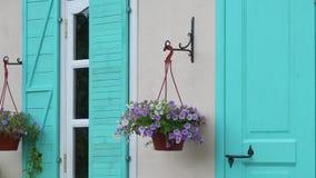 Pot met bloemen op de huismuur stock video