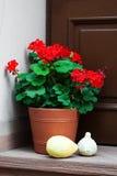 Pot met geraniumbloemen Stock Foto's