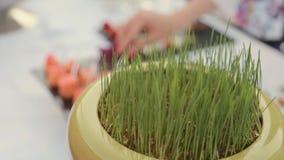 Pot met groen gras op een lijst in catering stock video
